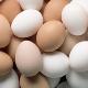 بازار تخممرغ عراق را از دست دادیم