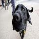 راه اندازی مرکز تربیت سگ های موادیاب