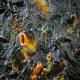 کنترل تولیدمثل در ماهی از طریق هورمون گنادوتروپین GnRH