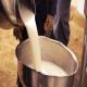 تاثیر شیر گاوهای آبستن بر اسپرماتوژنز موشهای نر