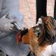 گروه های حساس جامعه در خطر آنفلوانزای پرندگان