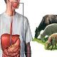 هشدار وزارت بهداشت در مورد شش بیماری مشترک