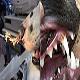 پاک کردن بدن سگ از گیاه foxtail یا جو موشه