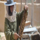 زنبورداری، زندگی فروزان را متحول کرد