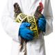 بایوسکیوریتی در مرغداریها