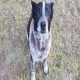 نجات دختربچه گمشده توسط سگ سالخورده