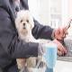 راهیابی سگها به محل کار
