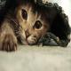 اصول نگهداری از گربه (بخش اول)