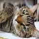 اصول نگهداری از گربه (بخش سوم)