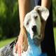 حساسیت به حیوانات خانگی و انتقال بیماری