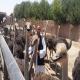 پرورش شترمرغ در ایران توسط اتباع بیگانه