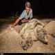 خطر انقراض لاکپشتهای پوزه عقابی قشم