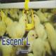 اسنت ال (Escent L)