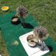 تغذیه جوجههای شترمرغ