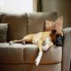 چگونه بوی بد سگ را در خانه از بین ببریم؟