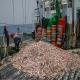 خسارت های صیادان چینی به آب های خلیج فارس