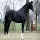 اسب نژاد الدنبورگ (Oldenburg horse)