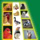 آمینو ساکارید مرغ گوشتی