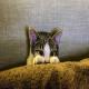 استرس در گربهها و پیامد آن