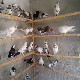 معرفی چند گونه کبوتر در ایران