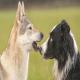 تاریخچه دوستی انسان و سگ