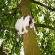 نجات گربهی گیر افتاده روی درخت