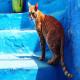 جان گردشگر بریتانیایی توسط گربه گرفته شد