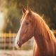 واقعیاتی جالب درباره اسبها