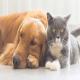 واردات حیوانات خانگی از روسیه و اوکراین