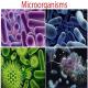 نابودی کامل میکروارگانیسمها