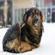 چطور بفهمیم سگ احساس سرما می کند