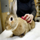 خرگوشها را حمام خشک کنید