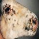 بیماری آبله در گوسفند و بز (Pox)