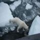 زباله های دردسرساز برای حیات وحش قطب