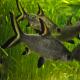 ماهی سیلور شارک (Bala shark)