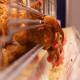 افزایش ظرفیت تحمل تغییرات جیره در مرغها