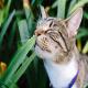 10 گیاه سمی برای سگ و گربه