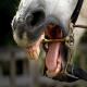 مشکلات دندانی در اسب