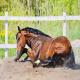 کولیک اسپاسمودیک اسب