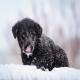 چه زمان سگ ها سرما می خورند؟