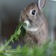خوراکیهای ممنوعه برای خرگوشها