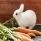 غذاهای مناسب خرگوش
