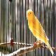 پرندههای خانگی مناسب آپارتمان
