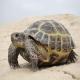 لاکپشتهای خشکی