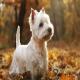 کوچکترین نژادهای سگ دنیا