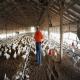فعالیت در مزارع پرورش طیور و رخداد سرطان