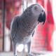 روشهای کاهش استرس در پرندگان زینتی