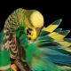 تولکی یا پر ریزان در پرندگان