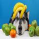 مصرف میوه و سبزیجات برای سگ و گربه