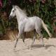 اسب نژاد اندلسی (Andalusian horse)